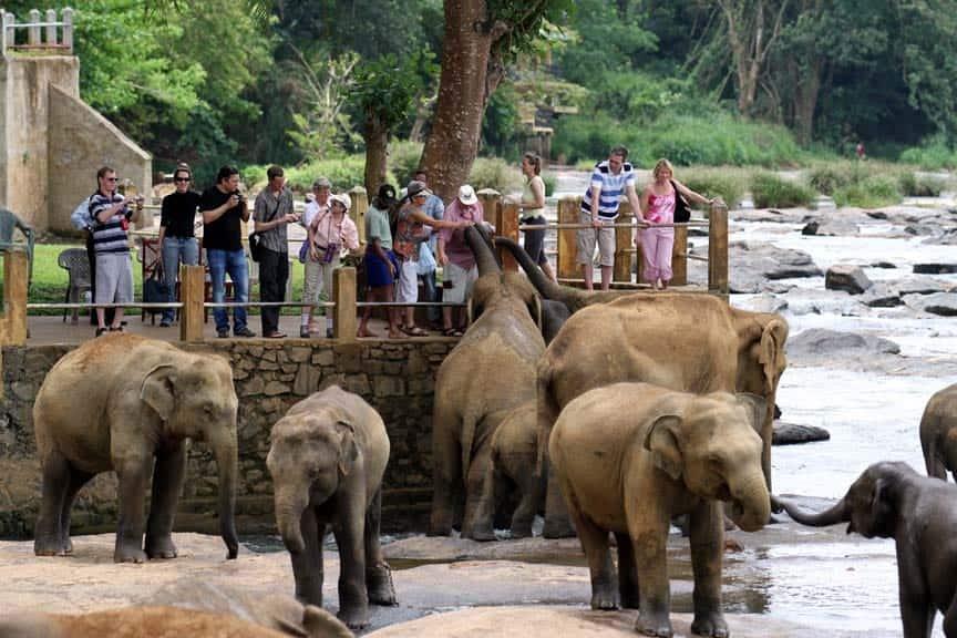 sri lanka _pinnawala_Elephants_wowtovisit_elephants orphanage