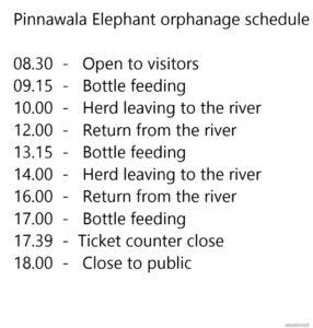Elephants_pinnawala-schedule_wowtovisit_e