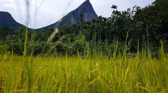'Meemure' (මීමුරේ) is 1 of the amazing village