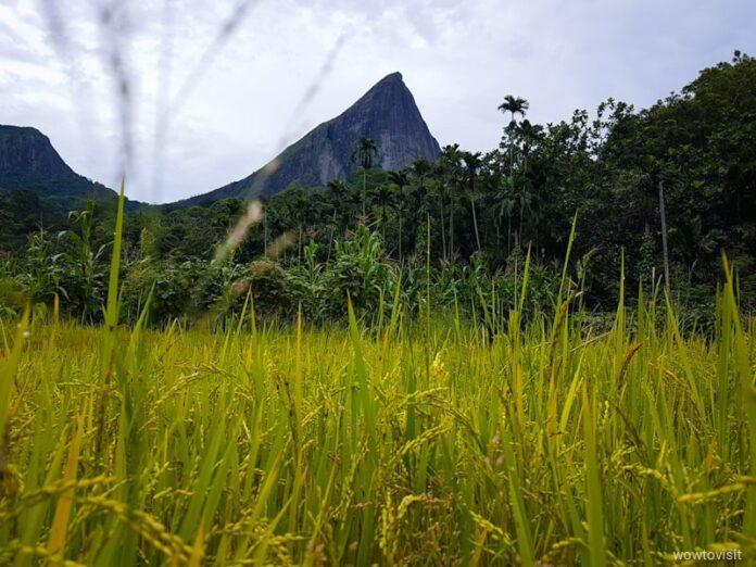 Meemure (මීමුරේ) is 1 of the amazing village