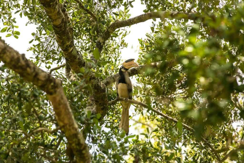 Udawalawe National park_udalawalawe_udawalawa