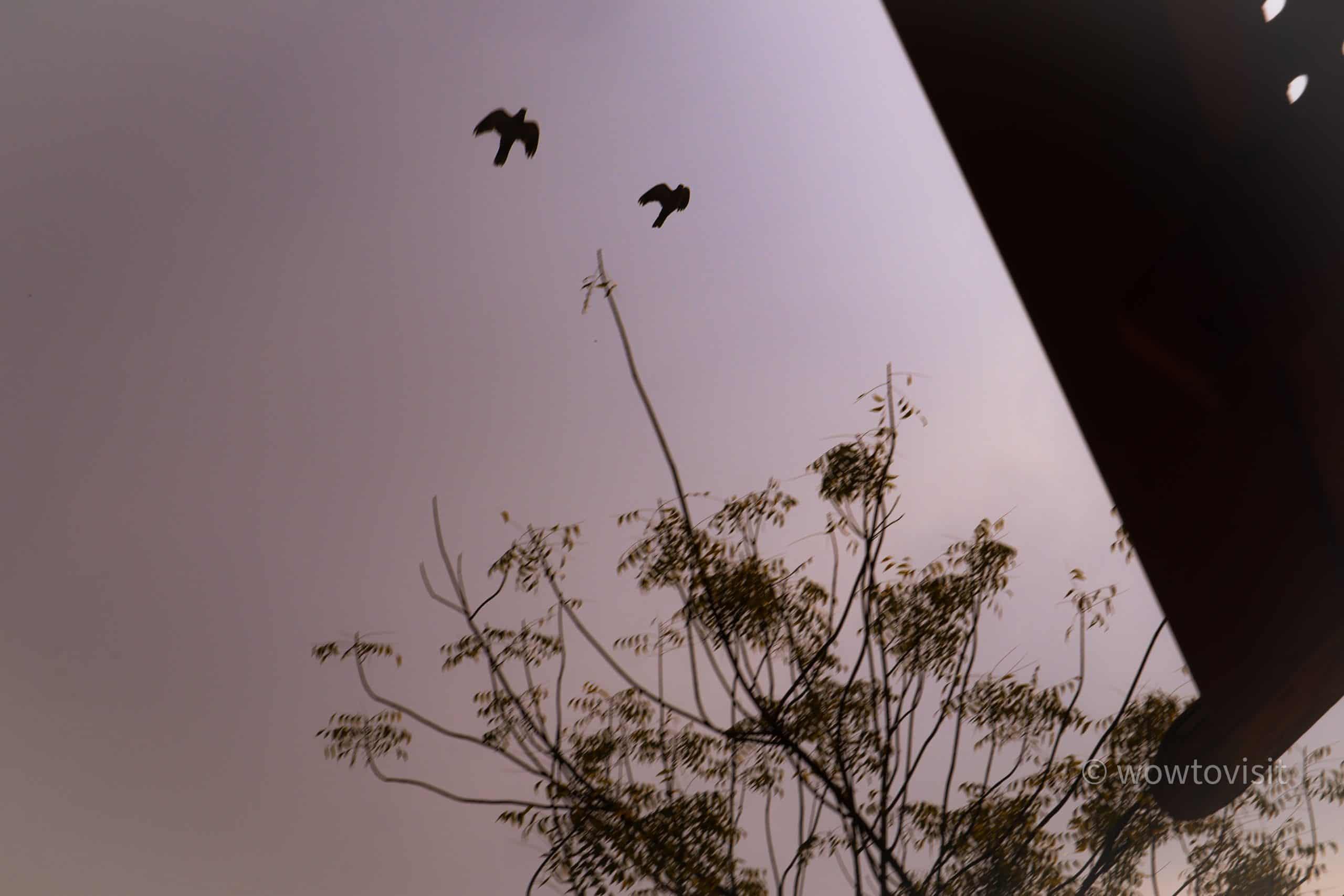 birds andalusgarden bahrain 1 scaled