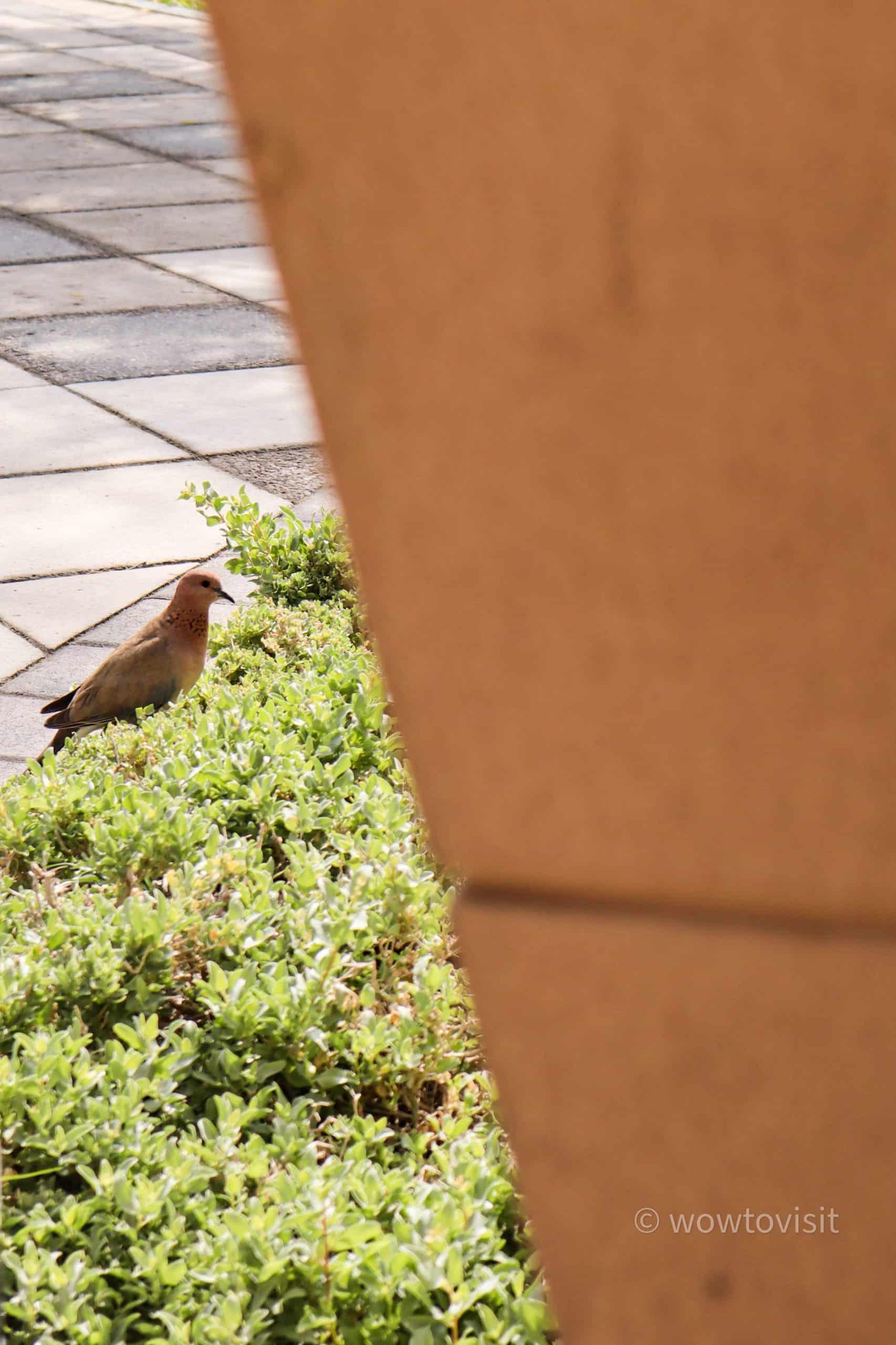 birdsandalusgardenbahrain2 scaled