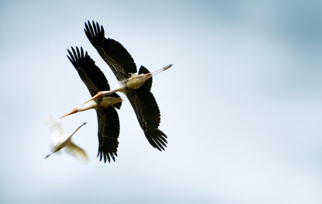 birds in sri lanka_sri lankan birds