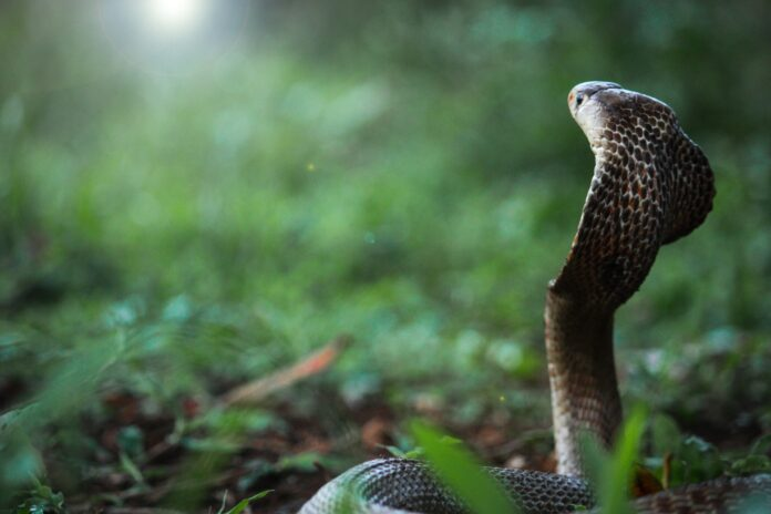 snake 5515691 1920